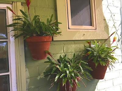 A good wall pot plant