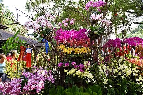 The Orchid Wonderland Has Arrived In Singapore