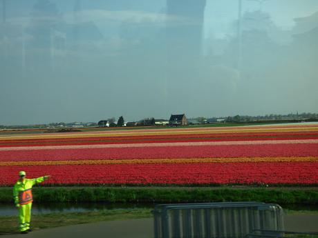 Visit Keukenhof Tulip Gardens Dutch Bulb Fields
