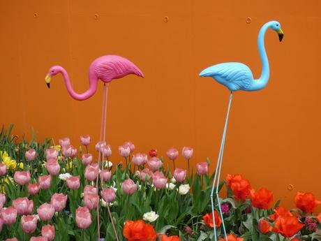 Visit Keukenhof Tulip Garden Holland