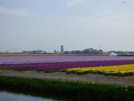 Visit Keukenhof Tulip Garden Holland Bulb Fields