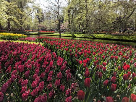 Visit Keukenhof Tulip Gardens Holland Hyacinths