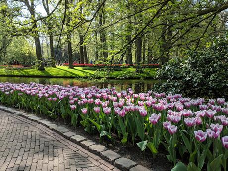 Keukenhof Gardens Excursion Chocolates and Floral Fred Olsen Cruise