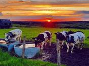 Another Beautiful Sunset Village #sunset #benheinephotography #countryside #campagne #nature #cows #cow #farm #rochefort #lessive #eprave #soleil #sun #beauty #photo