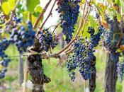 Wine Not? Take Tour Armenia Georgia