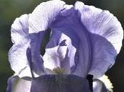 Pink Annd Purple Little White