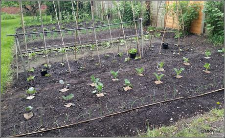 Mid-May plot update