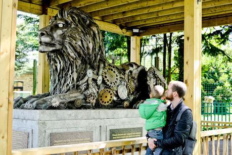 big cats paradise wildlife park, paradise wildlife park,