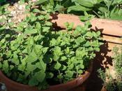 Praise Herbs