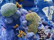 Only Japan's Largest Coral Reef Healthy After Historic Bleaching Disaster
