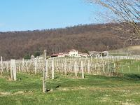 Nebbiolo is Still King at Breaux Vineyards