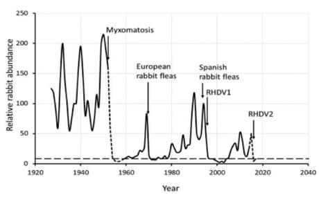 Greater death rates for invasive rabbits from interacting diseases