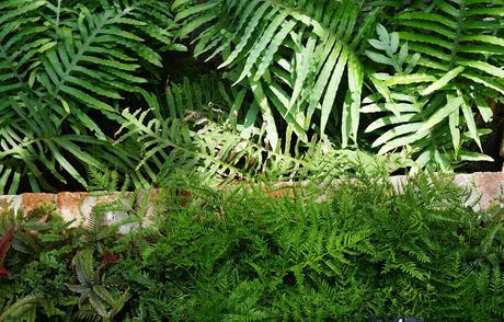 The Tropical Ravine