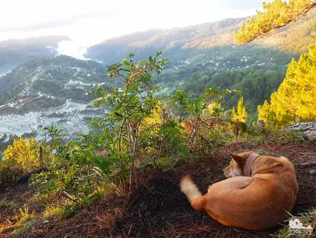 Kunig the guide dog