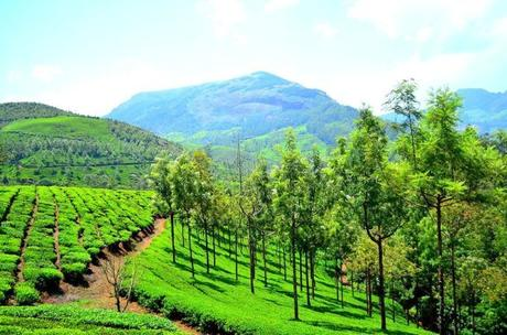 Munnar – The Perfect Destination for a Trip with Friends