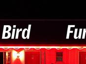 Jade Bird 'Furious' Stream