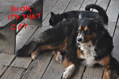 Bob A Dog and CoryCat