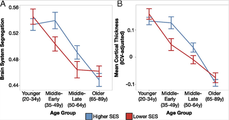 Socioeconomic status moderates age-related differences in brain organization throughout adulthood.