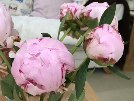 In a Vase on Monday – Perfect Peonies