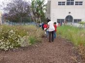 OBSERVING NATURAL HISTORY Esperanza Elementary School, Angeles,