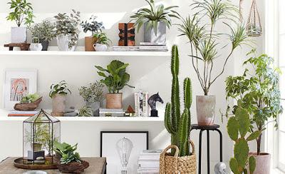 inspiration board | decorating with plants