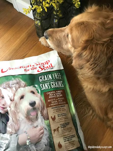 grain-free dog food for your dog with allergies