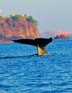 Blue-Whale-diving-Trico-Blu, Sri Lanka