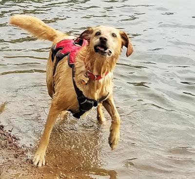 Jake Goes Swimming!