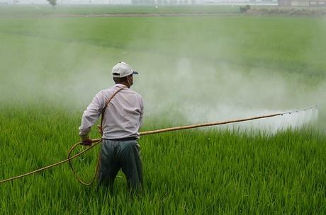 herbicide-avignon-in-rice-field