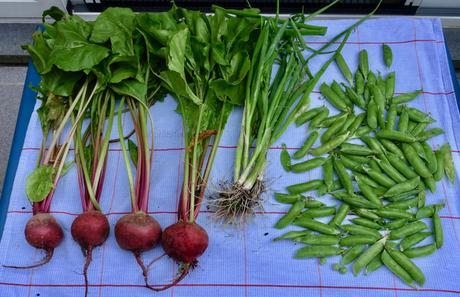 Latest harvests from our garden with yummy recipes!