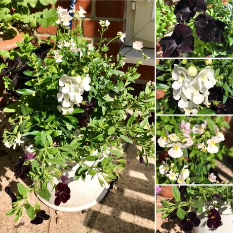Six on Saturday – Patio Planting 23-06-2018
