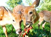 What Deer Like Wild?
