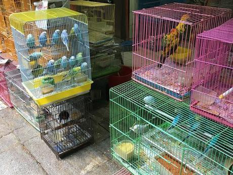 Hong Kong: Goldfish, Flower, and Bird Market