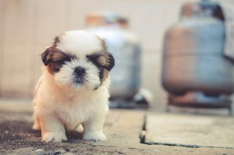 How to Potty Training a Puppy: From Start To Finish