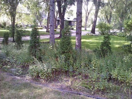 Nature Manitoba Garden Tour 2018
