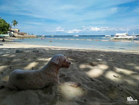 Polly contemplating life as a dog