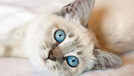 20 ways cats show love and affection   Do you love me?