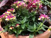 Late Comer Party Patio Container