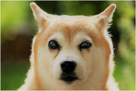 5 Shocking Causes of Sudden Blindness in Dogs, Diagnosis, Avoid