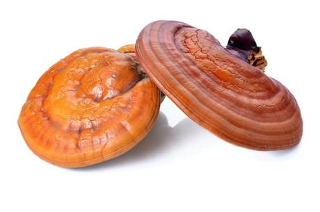 14 Secrets of the Reishi Mushroom