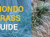 Complete Guide Mondo Grass