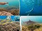 Discover Trincomalee's Pigeon Island-The Snorkelling Haven SriLanka