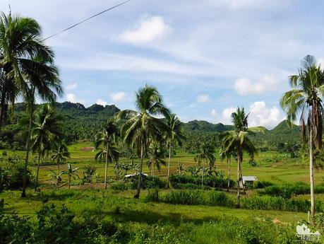 Farms and coconut grooves