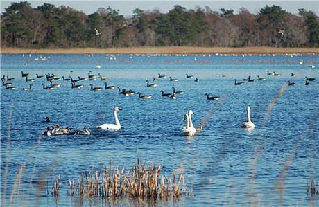 India: Paradise for bird lovers