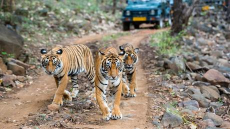 Things to know before going for wildlife safari in India
