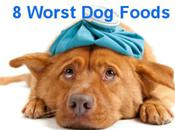 Worst Foods Feed Your