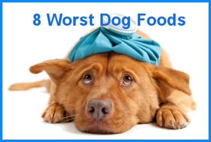The 8 worst foods you can feed your dog paperblog