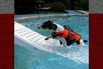 When Dogs Fall Into The Swimming Pool There S The Skamper