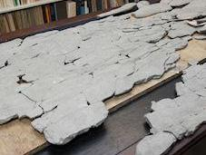Mystery Fossil Named 'Godzillus' Found