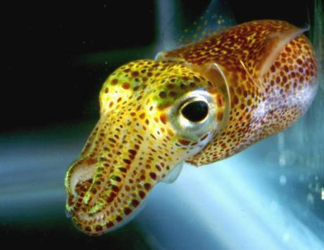 Think Ink: The World's 10 Cutest Squids